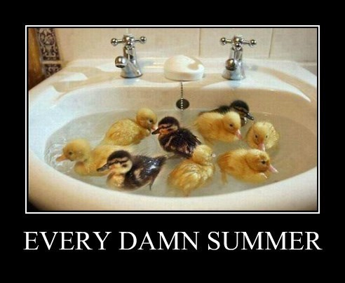 bugs,summer,ducks,funny