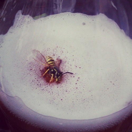 beer,bees,funny