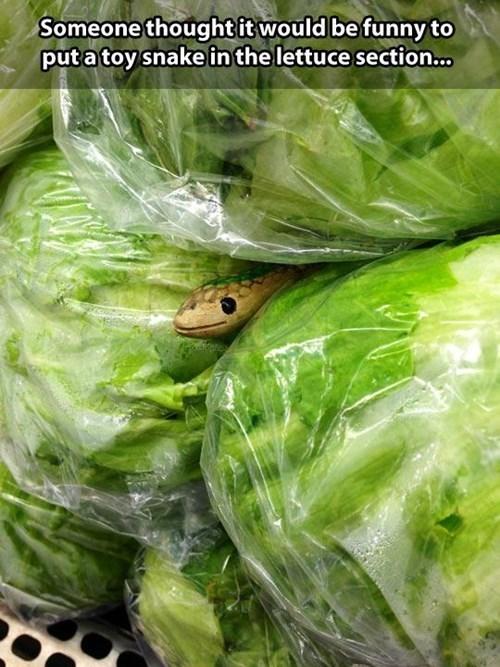 lettuce snakes - 8291139584