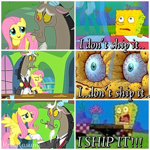 shipping,discord,fluttershy