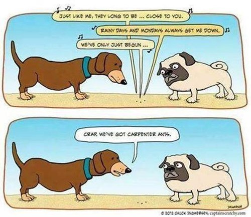 dogs Music puns ants carpenters web comics - 8291433984