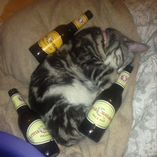 beer cute Cats funny - 8291487232