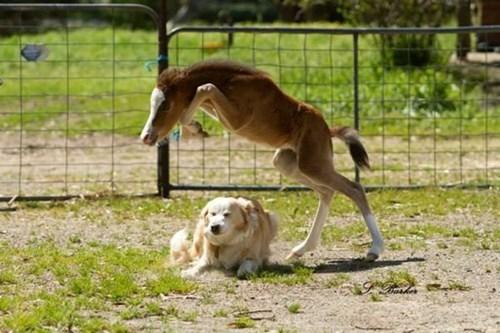 dogs cute horses - 8291617536