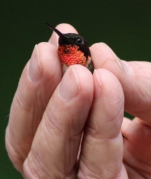 tiny humming birds cute beautiful - 8291622400