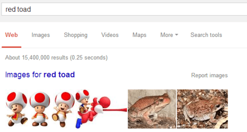 toad google search animals - 8291680256
