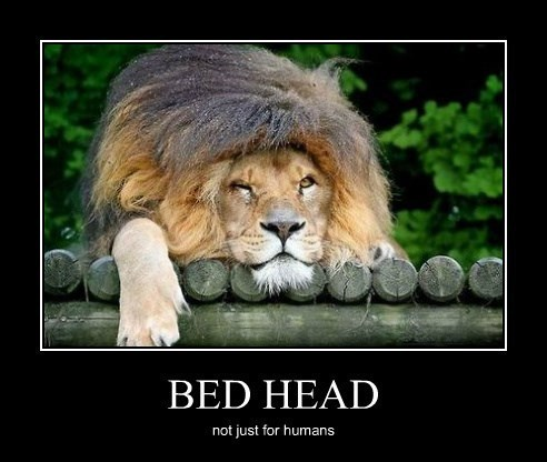 wtf lion bed head funny