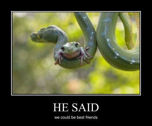 friends,snakes,funny,frogs