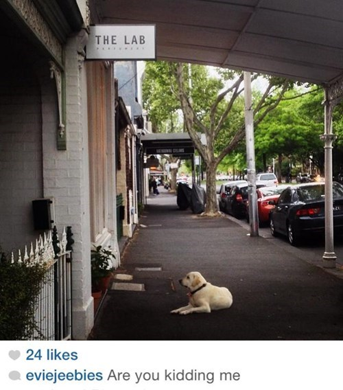 dogs,instagram,irony