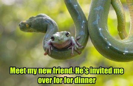 frog legs dinner snakes funny frog - 8291937792