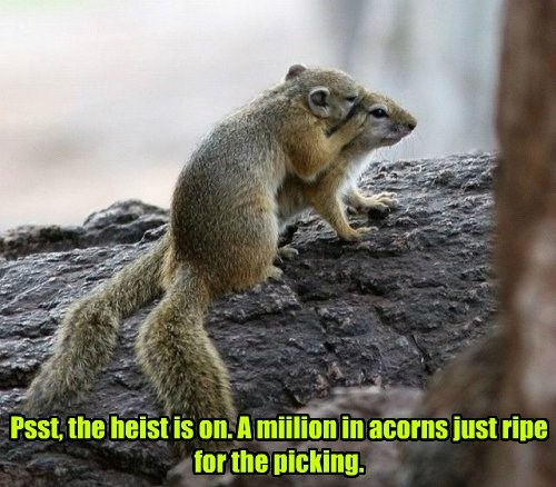 heist squirrel nuts - 8292019200