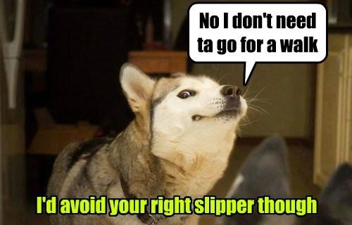 dogs poop walking funny - 8292028416