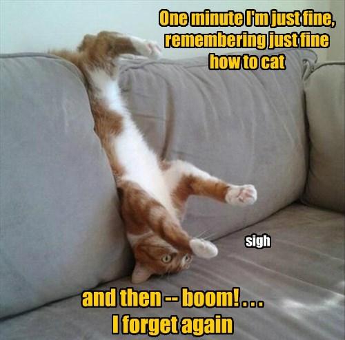 Cats funny weird