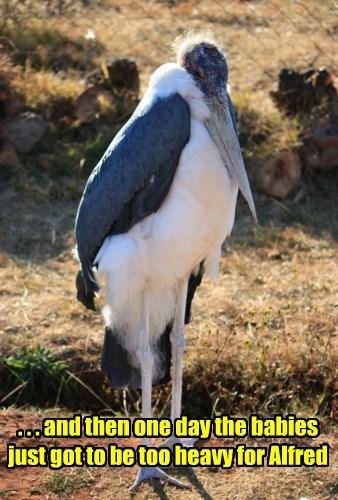 Babies retire stork - 8292616704
