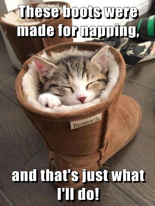 I sits I fits cute napping comfortable - 8292661248