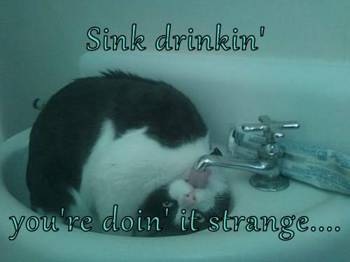 drinking sink Cats funny - 8292698112
