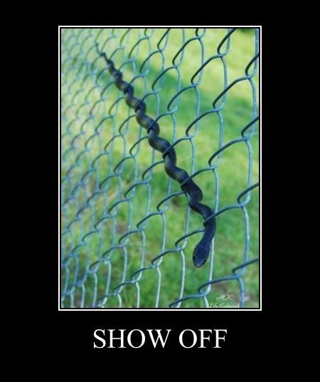 funny snake - 8292858112
