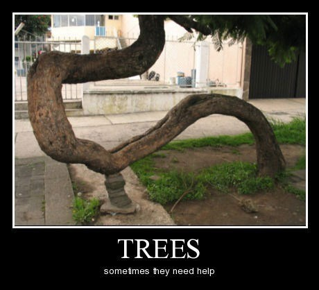 nature rocks trees help funny - 8292858368