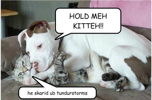 dogs thunder cute scared Cats - 8292888064