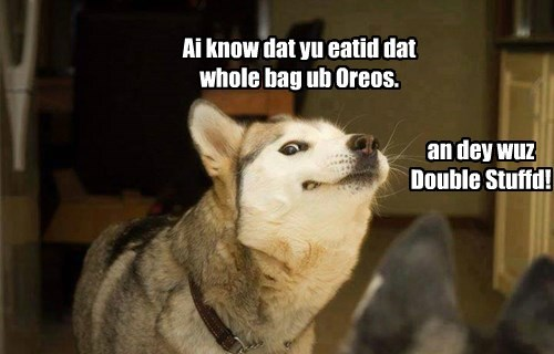 dogs Oreos secrets cookies