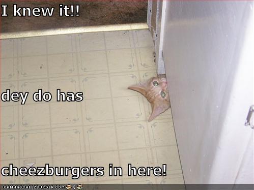Cheezburger Image 829304064