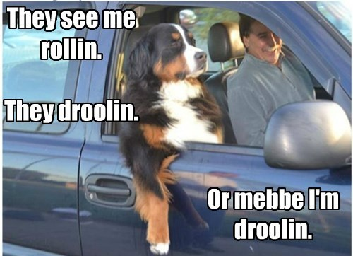 dogs,drooling,driving