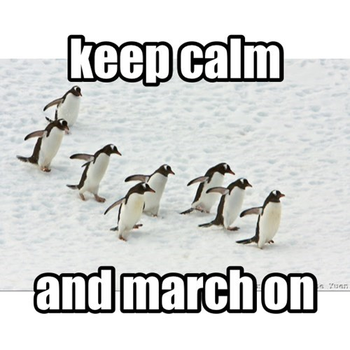 keep calm and carry on penguins - 8293489920