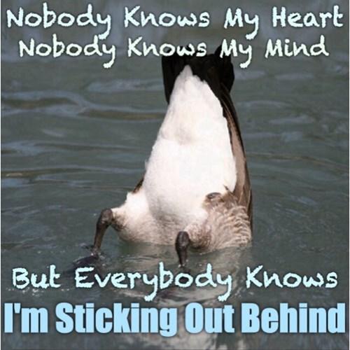 ducks poetry - 8293602560