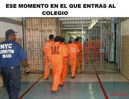 bromas Memes - 8293680384