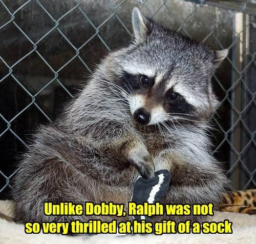 Harry Potter socks raccoons - 8293789952