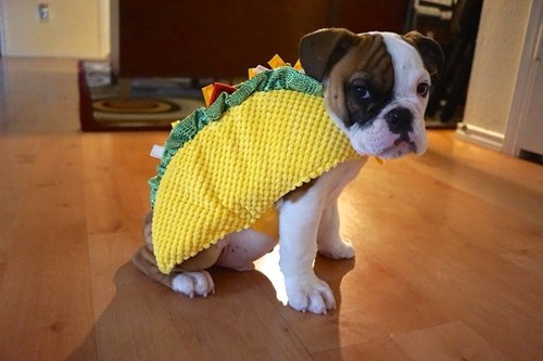 costume dogs tacos poorly dressed - 8293851904