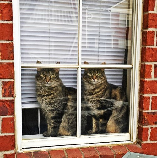 twins Cats - 8293933568
