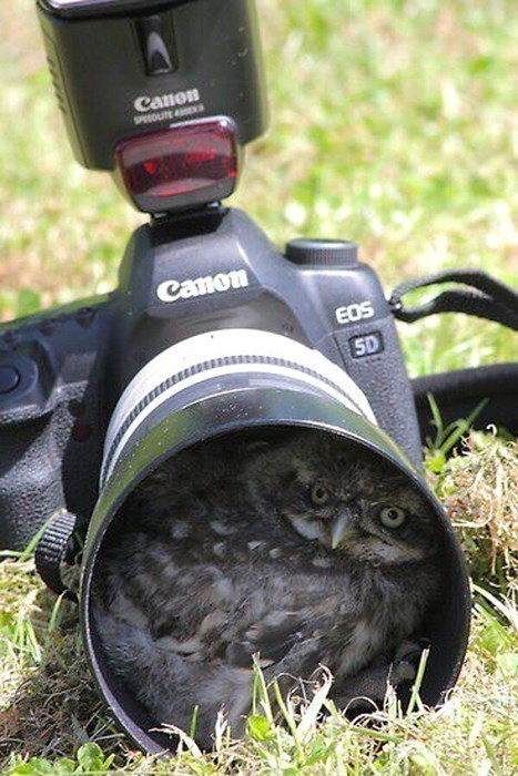 photography cute owls