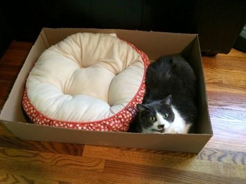 if i fits i sits Cats box