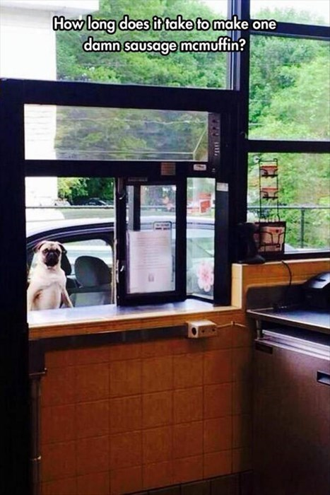 dogs funny fast food - 8293998336