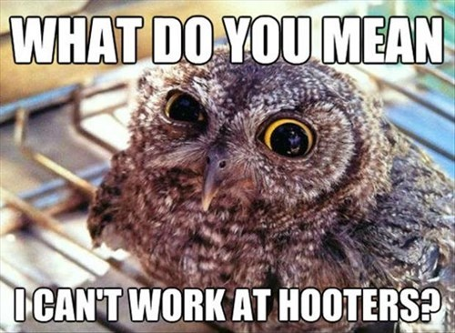owls,hooters,funny
