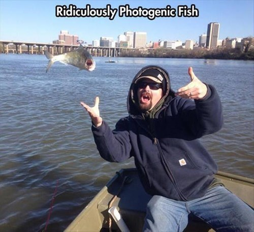 photogenic fish funny