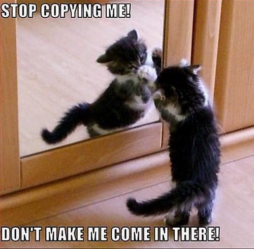 kitten mirror Cats - 8294012928