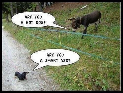 puns donkeys - 8294014208