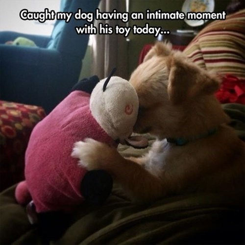 dogs,stuffed animals,cute