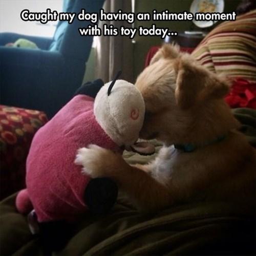 dogs stuffed animals cute - 8294047488