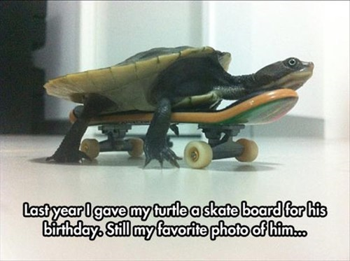 skateboarding birthday turtles - 8294051584