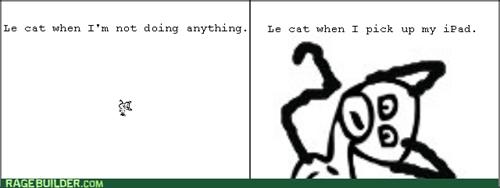 ipad,Cats