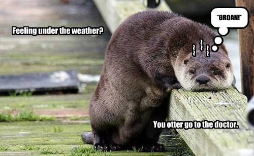 puns otters sick funny - 8294140928