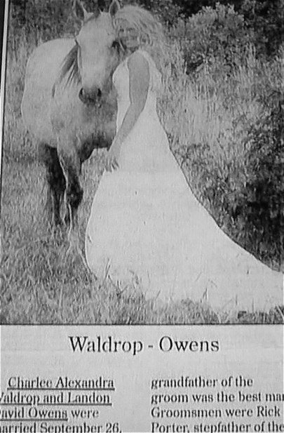 accidental gross wedding horse newspaper - 8294168064