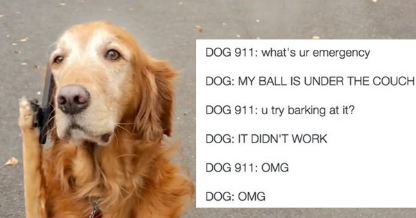 911,dogs,twitter,emergency,list