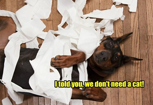 dogs toilet paper Cats - 8294725632