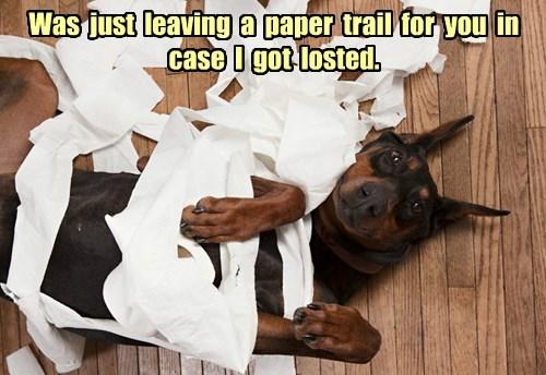 dogs,puns,mess