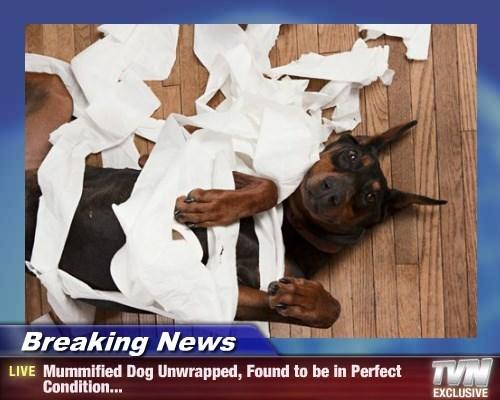 dogs Breaking News funny mummies - 8294929408