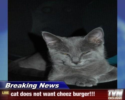 Cheezburger Image 8294965504