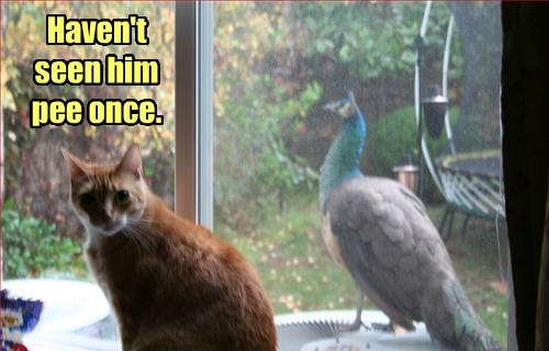 puns peacock Cats funny - 8295150336